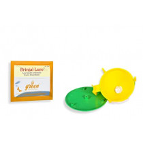 Funnel trap with Brinjal lure
