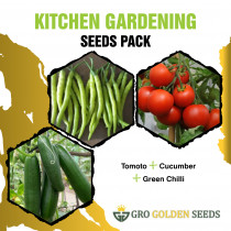 Tomato, Cucumber and Chilli Seeds (Combo Pack)