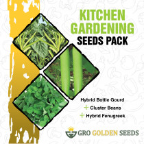 Cluster Beans, Bottle Gourd and Fenugreek Seed (Combo Pack)