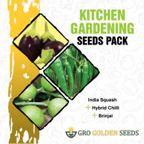 Indian Squash, Chilli Hybrid and Brinjal Seed (Combo Pack)