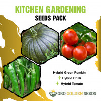 Pumkin, Chilli and Tomato Seed (Combo Pack)