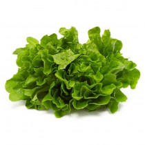 Lettuce Green Curled Seeds